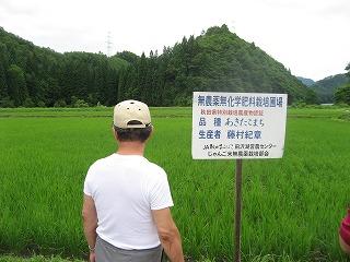 無農薬栽培田