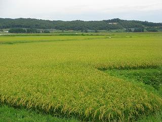 鮭川村の田んぼ