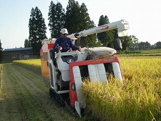 神代の稲刈り