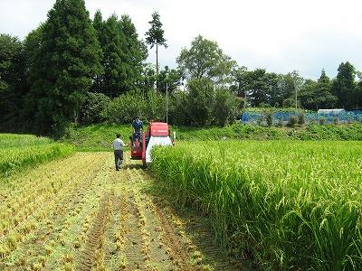 WCSの稲刈りが始まりました。