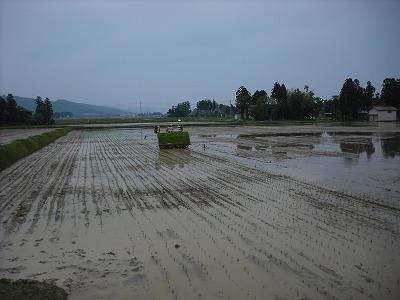 三和の田植え3