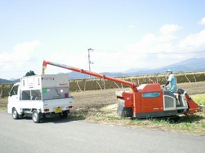 自然乾燥米じゃんご米の収穫