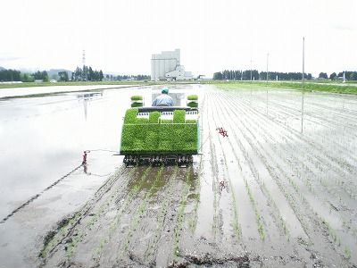 神代田植え2010