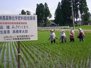 手取り除草
