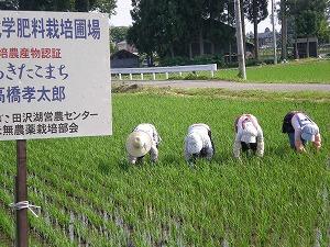 手取り除草2